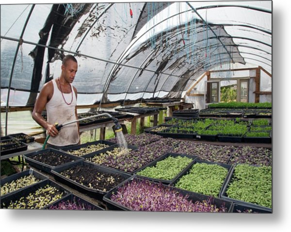 Volunteer At An Urban Farm Metal Print by Jim West