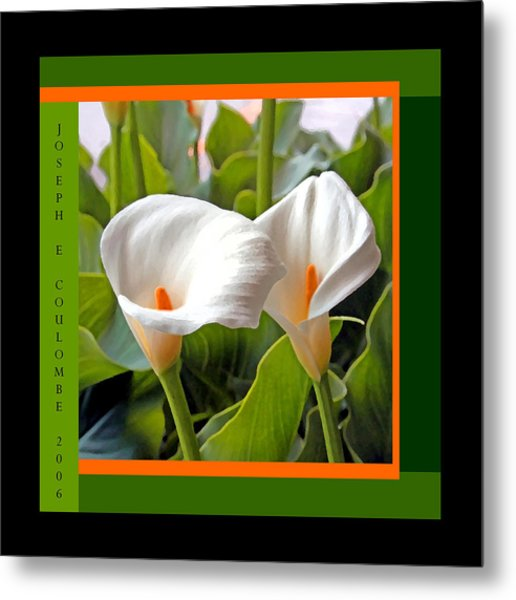2 White Lily Flowers Metal Print