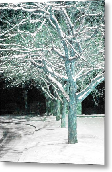 Winter Trees Metal Print by Guy Ricketts