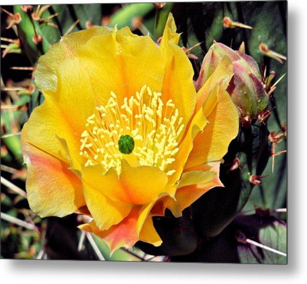 Yellow Cactus Bloom  Metal Print