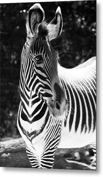 Zebra Portrait Metal Print