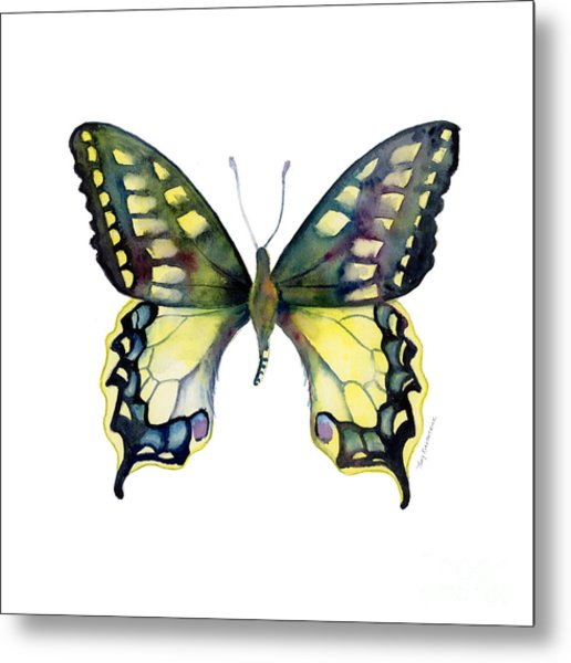 20 Old World Swallowtail Butterfly Metal Print