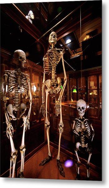 2000s Three Human Skeletons Displayed Metal Print