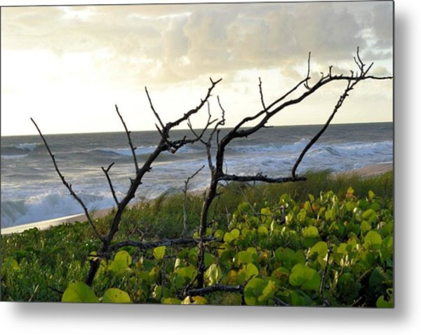 Beach Metal Print by William Watts