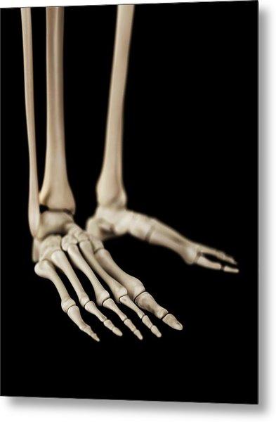 Human Foot Bones Metal Print by Sebastian Kaulitzki
