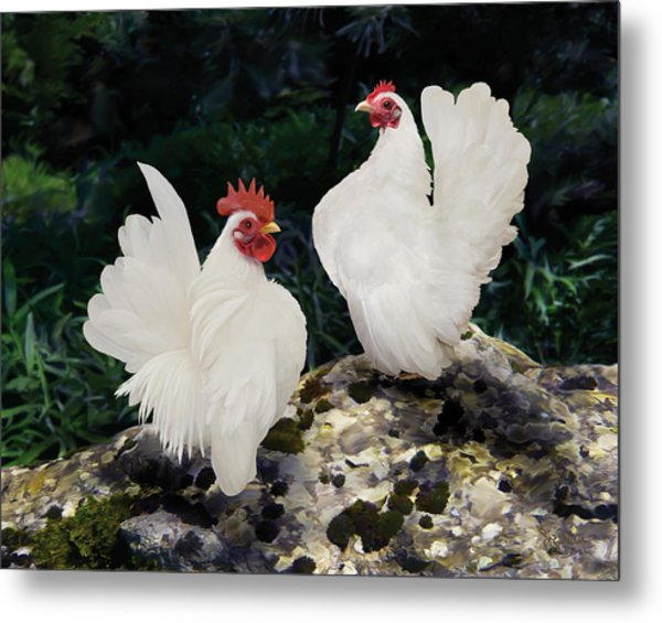 23. Pair White Serama Metal Print