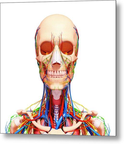 Female Anatomy Metal Print
