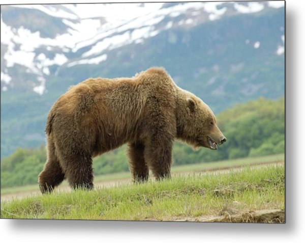 Alaska Wilderness Metal Print