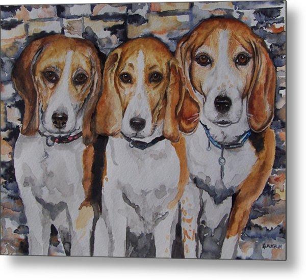 3 Amigo Beagles Metal Print