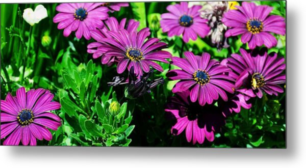 Blooms In Bloom Metal Print by JAMART Photography