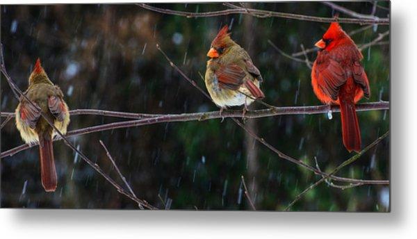 3 Cardinals On A Branch  Metal Print
