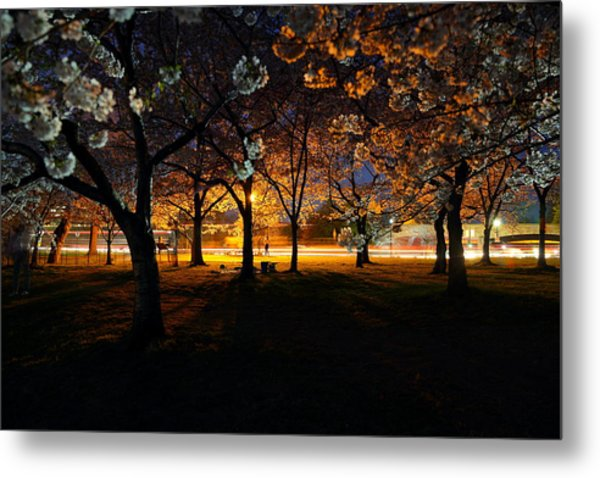 Cherry Blossoms At Night Metal Print
