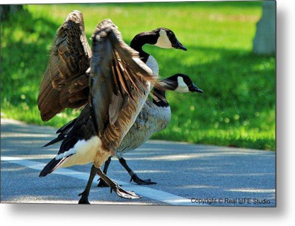 Geese Crossing Metal Print