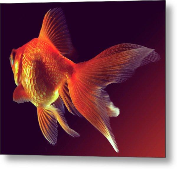 Goldfish Metal Print by Mark Mawson