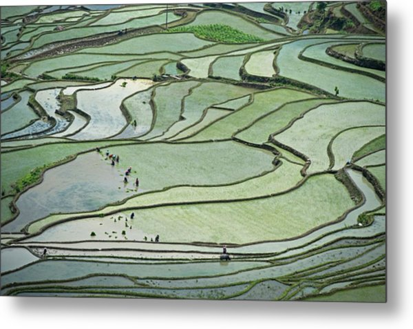 Hani Rice Terraces Near Yuanyang Metal Print by Tony Camacho