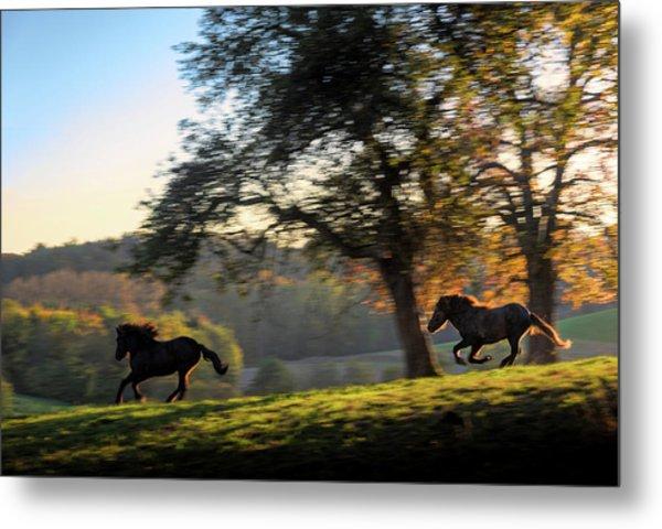 Horses Running At Sunset, Baden Metal Print