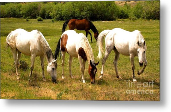 Line Dancing At The Coral Metal Print by Claudette Bujold-Poirier