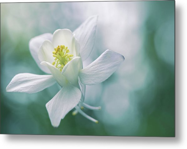 Purity Metal Print by Jacky Parker