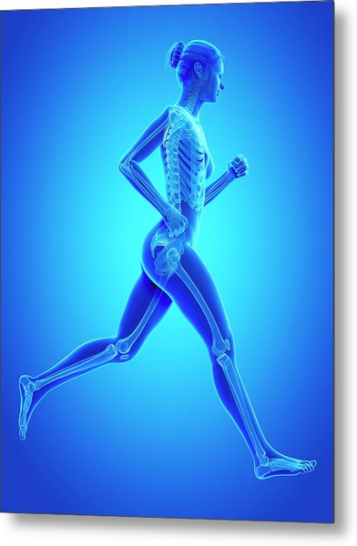 Skeletal System Of A Runner Metal Print