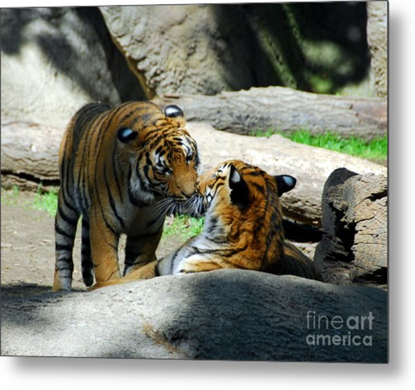 Tiger Love 2 Metal Print