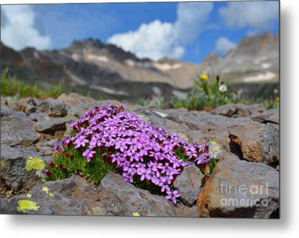 Metal Print featuring the photograph Wildflowers by Kate Avery