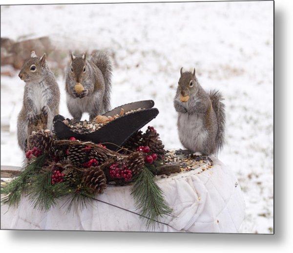 3 Wise Squirrels Metal Print