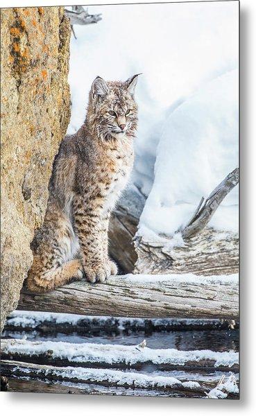 Wyoming, Yellowstone National Park Metal Print