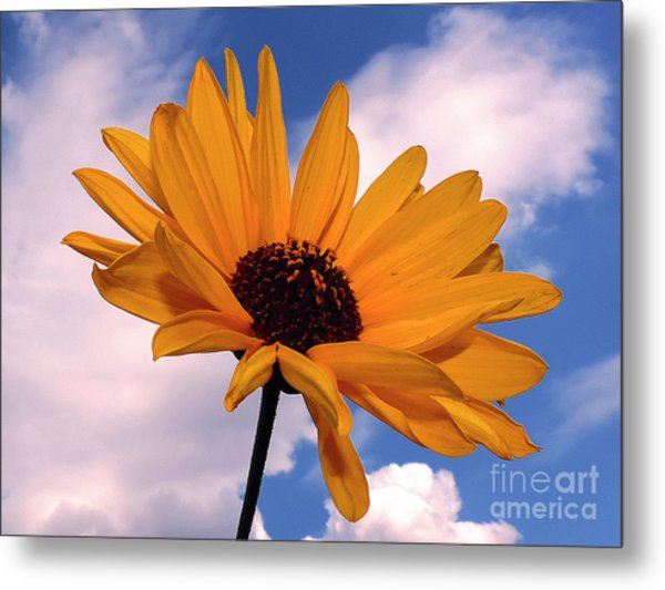 Yellow Flower Metal Print by Elvira Ladocki