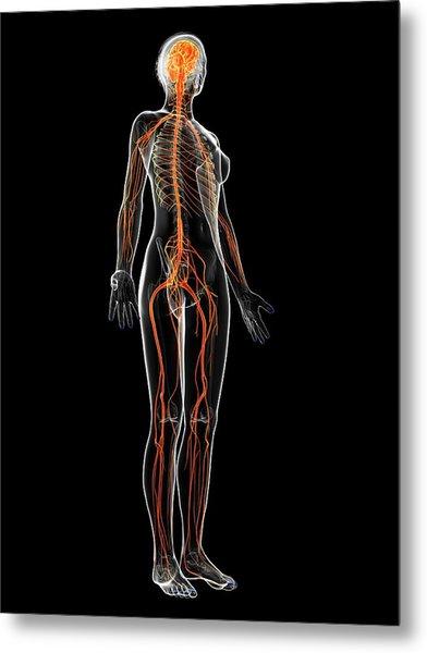 Female Nervous System Metal Print by Sebastian Kaulitzki