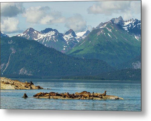 Usa, Alaska, Glacier Bay National Park Metal Print