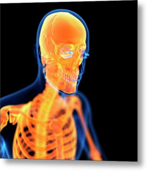 Human Skull Metal Print by Sebastian Kaulitzki