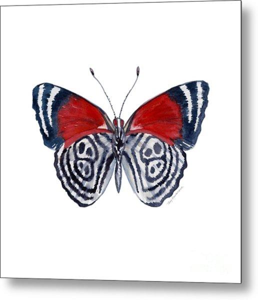 37 Diathria Clymena Butterfly Metal Print