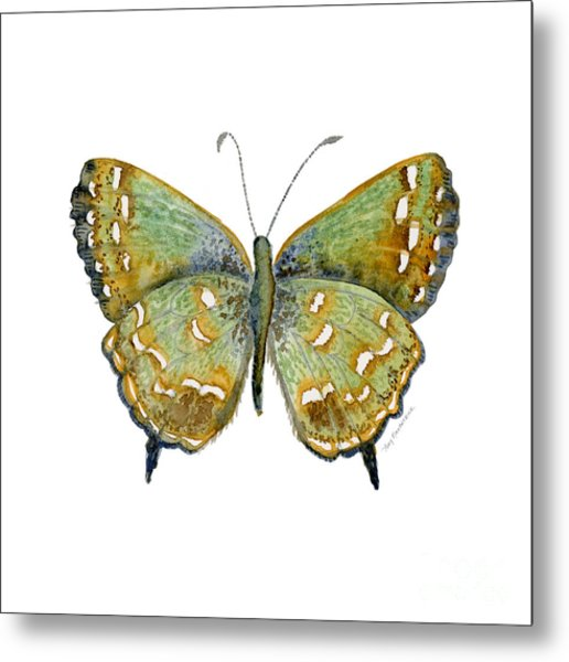 38 Hesseli Butterfly Metal Print