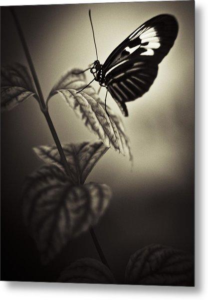 Butterfly Brown Tone Metal Print