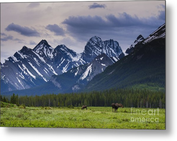 Engadine Meadow Metal Print by Ginevre Smith