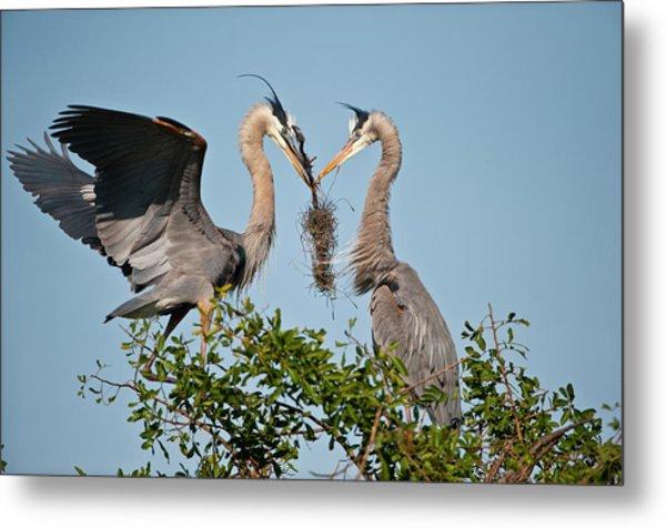 Florida, Venice, Great Blue Heron Metal Print