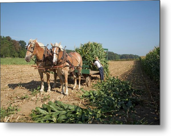 Harvest On An Amish Farm Metal Print by Jim West
