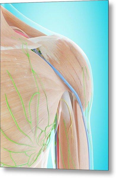 Human Shoulder Anatomy Metal Print by Sciepro