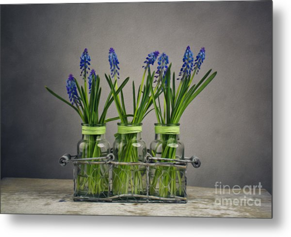 Hyacinth Still Life Metal Print