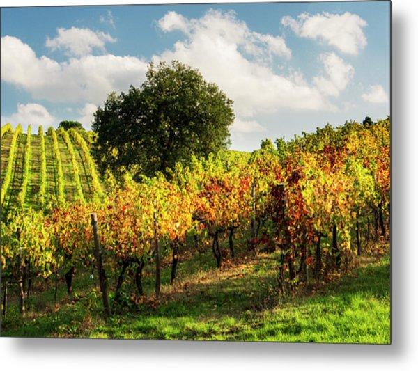 Italy, Tuscany, Chianti, Autumn Metal Print by Terry Eggers