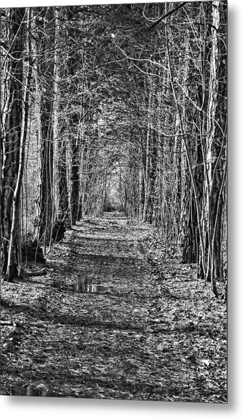 Metal Print featuring the photograph Pathway by David Armstrong