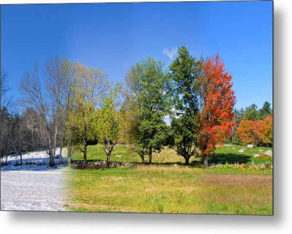 4 Season Trees In New Hampshire Metal Print