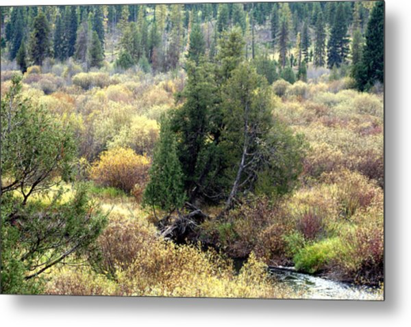 Seeley Lake In Montana Metal Print by Larry Stolle