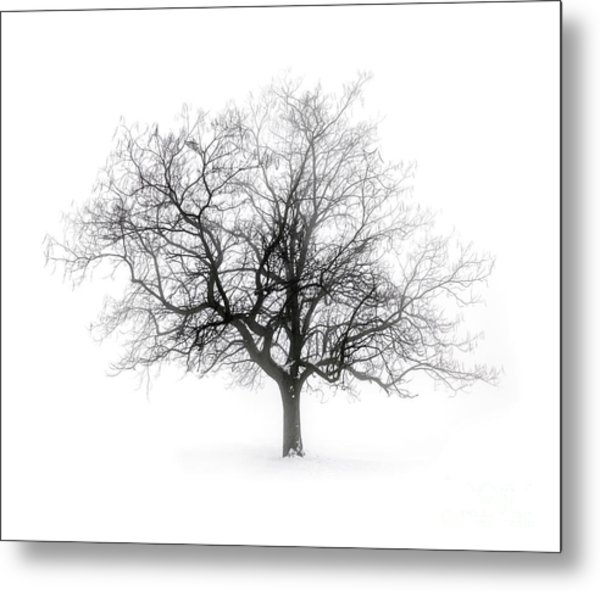 Winter Tree In Fog Metal Print
