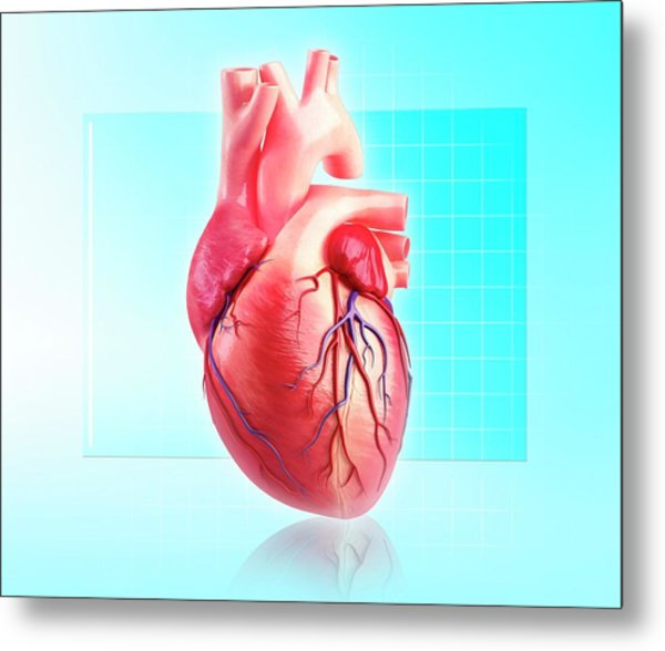 Human Heart Metal Print by Pixologicstudio/science Photo Library