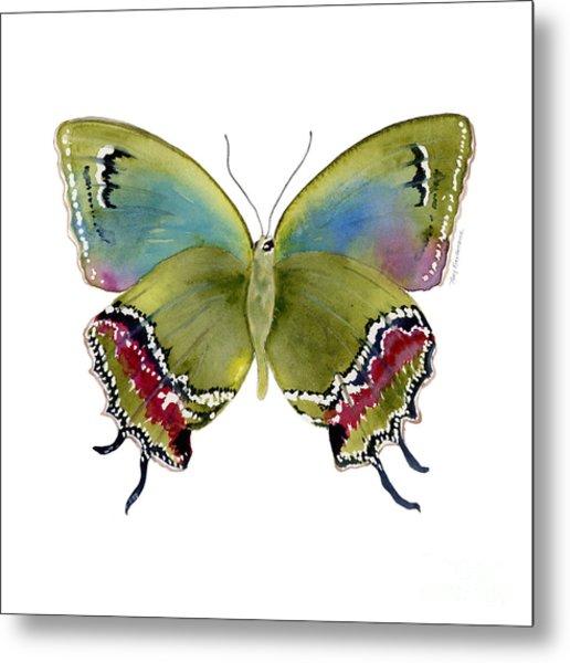 46 Evenus Teresina Butterfly Metal Print