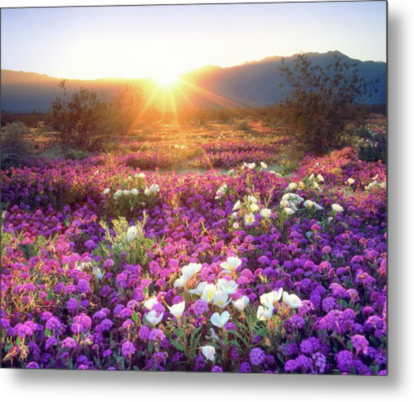 Usa, California, Anza-borrego Desert Metal Print