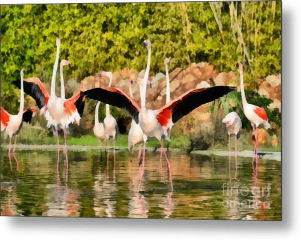 Greater Flamingos Metal Print