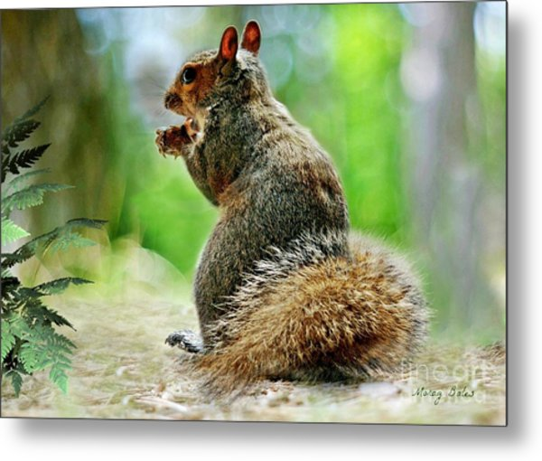 Harry The Squirrel Metal Print