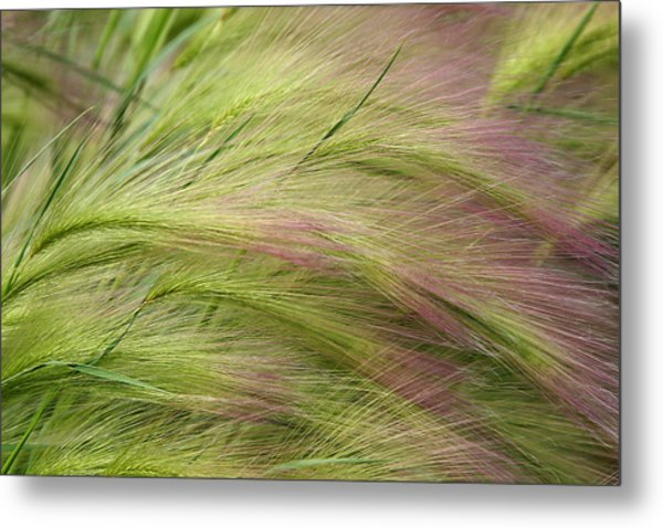 Whispers Metal Print by Lon Goudey